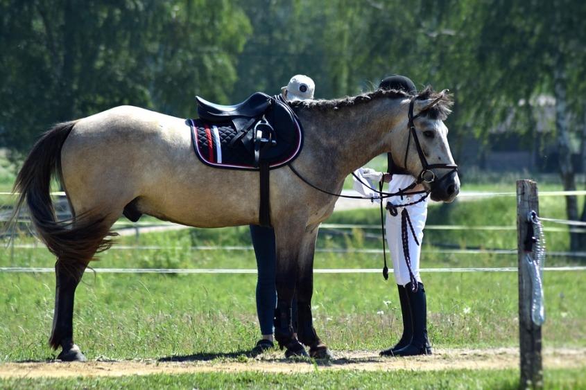 equestrian-1480944_960_720