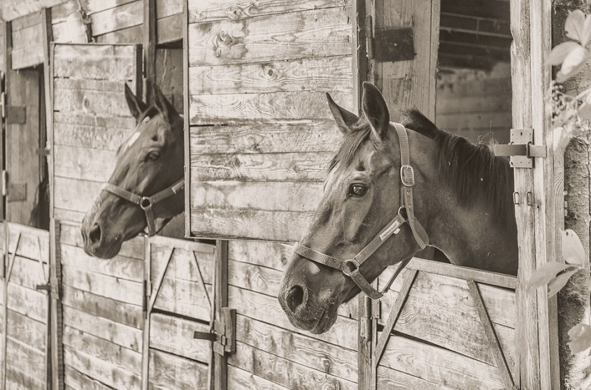 horse-1618104_960_720
