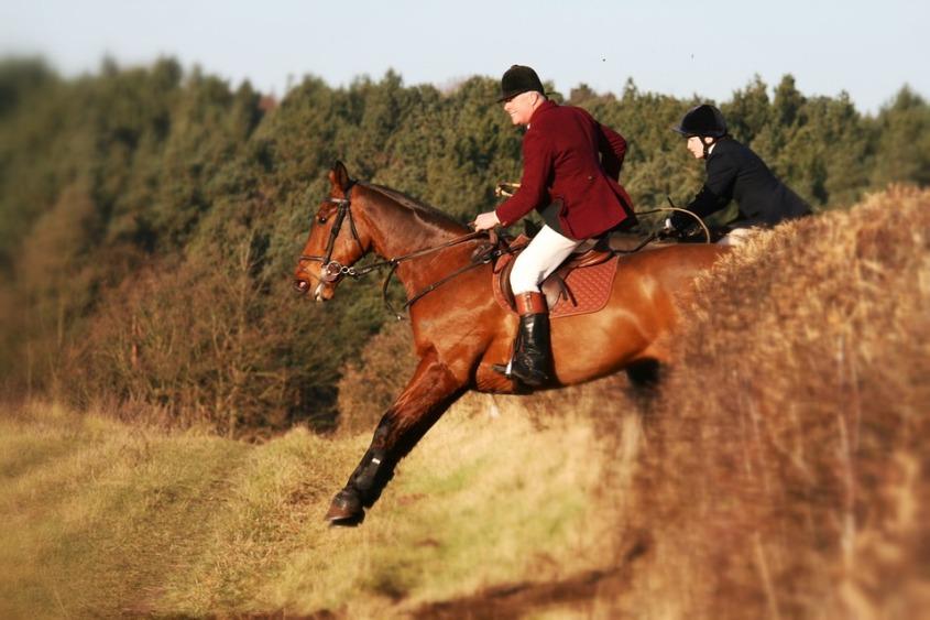 horse-2048590_960_720