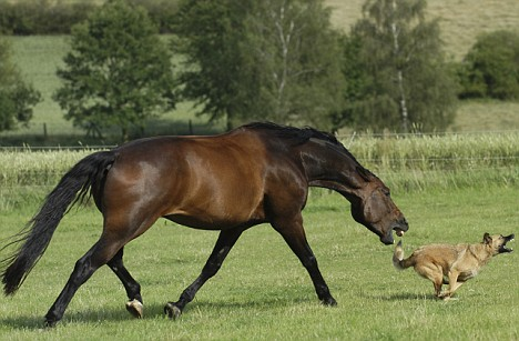 HORSE ATTACKS DOG IN UNLIKELY GAME OF CHASE