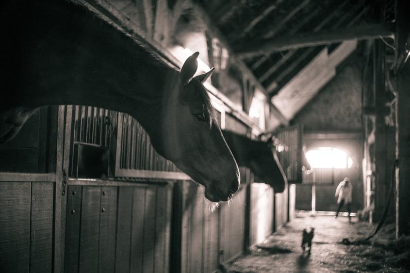 horses-786239_960_720