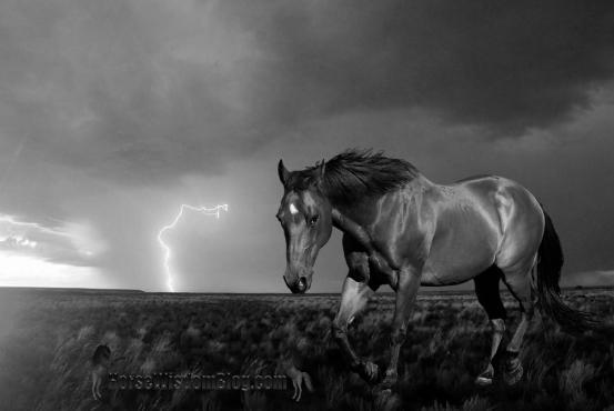 Horse Lightning