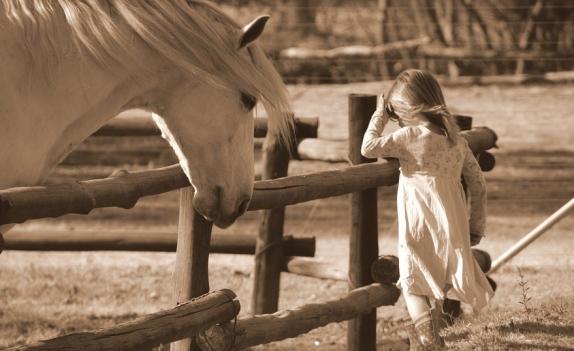 horse-2665770_960_720